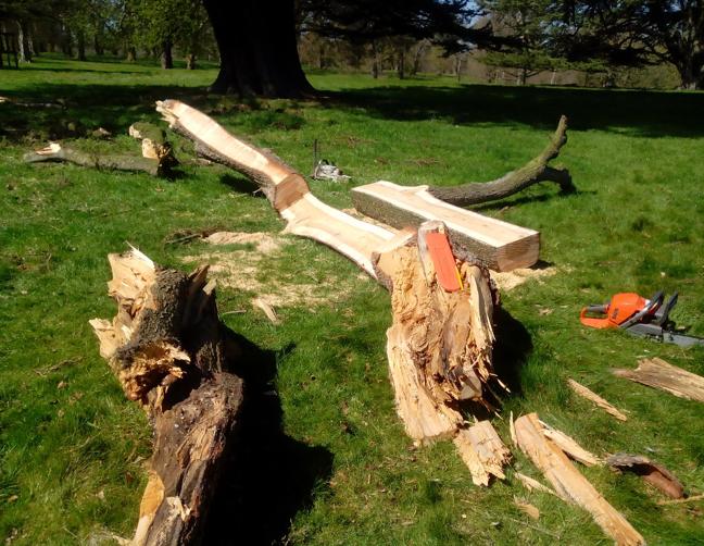 fallen-cedar-its-journey3